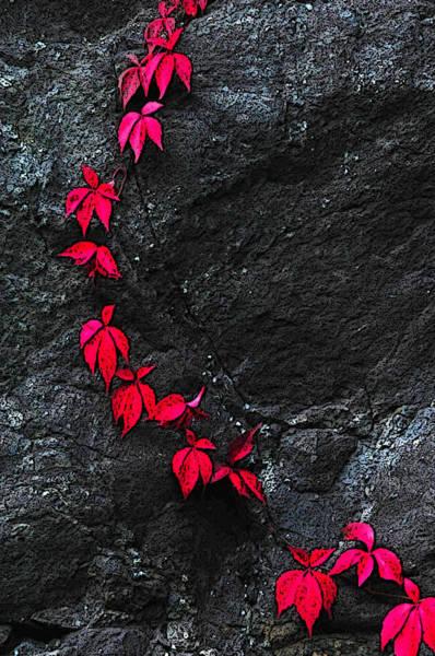 Photograph - Red Line by Randi Grace Nilsberg
