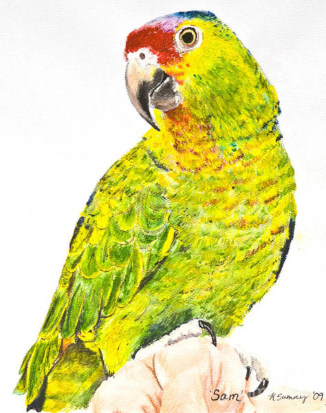 Painting - Red Lored Amazon Parrot In Watercolor by Kate Sumners