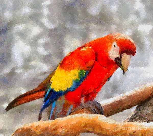Photograph - Red Macaw Parrot by Les Palenik