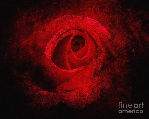 Photograph - Red Magic by Edmund Nagele