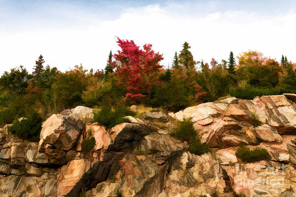 Photograph - Red Maple On Rocks - Painterly by Les Palenik