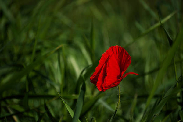 Photograph - Red On Green by Ivan Slosar