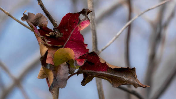 Photograph - Red Over Branch by Jorge Perez - BlueBeardImagery
