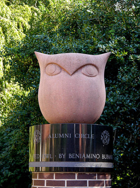 Red Owl At Temple Art Print