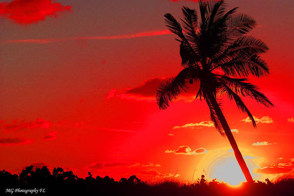 Photograph - Red Palm by Marty Gayler