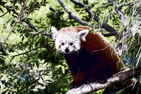Digital Art - Red Panda by Photographic Art by Russel Ray Photos