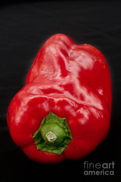 Photograph - Red Pepper Bringing Sexy Back by James BO Insogna