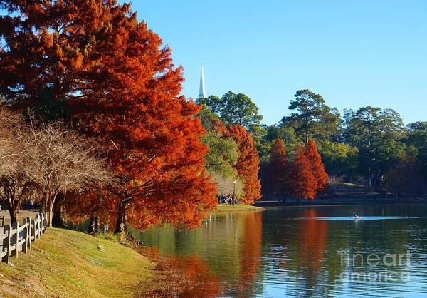 Photograph - Red Pine On Lake Ella by Gail Kent