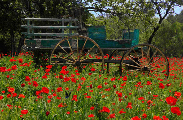 Red Poppies With Wagon Art Print