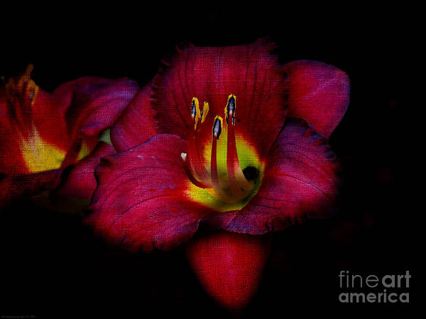 Photograph - Red Red Lily by Gena Weiser