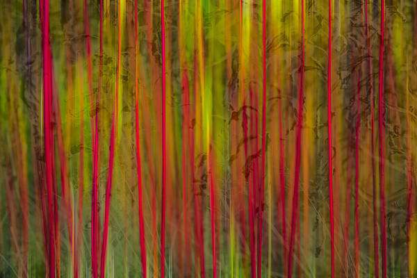Photograph - Red Reed by Andy Bitterer