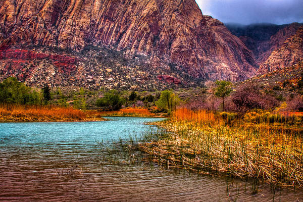 Red Deer Photograph - Red Rock Canyon Conservation Area by David Patterson