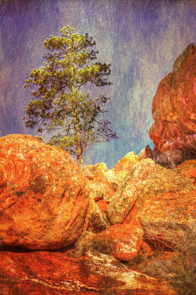 Photograph - Red Rock Pine-hdr by Barry Jones