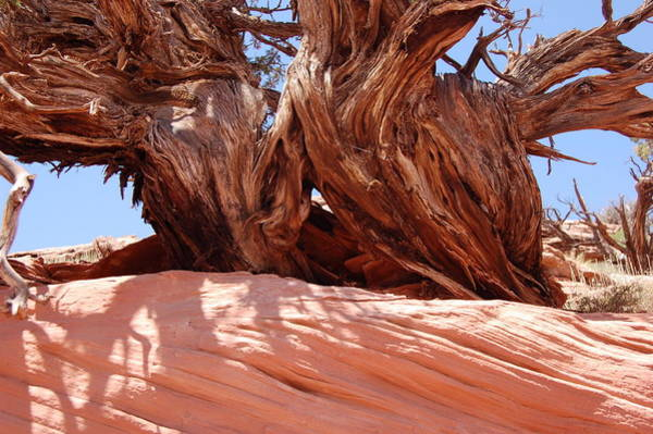 Wall Art - Photograph - Red Rock Tree by James Boyd