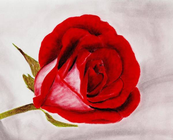 Drawing - Red Rose by Anastasiya Malakhova