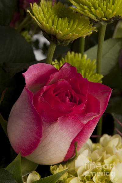 Photograph - Red Rose Bud 8033.02 by M K Miller
