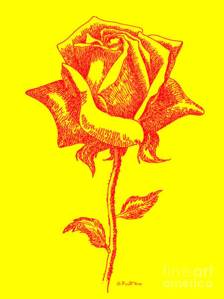 Digital Art - Red Rose Drawings 5 by Gordon Punt