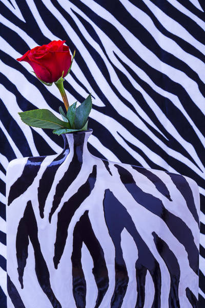 Wet Rose Wall Art - Photograph - Red Rose In Zebra Vase by Garry Gay