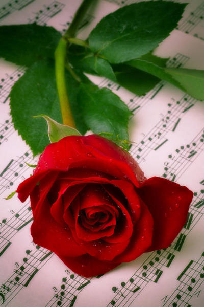 Wet Rose Wall Art - Photograph - Red Rose On Sheet Music by Garry Gay