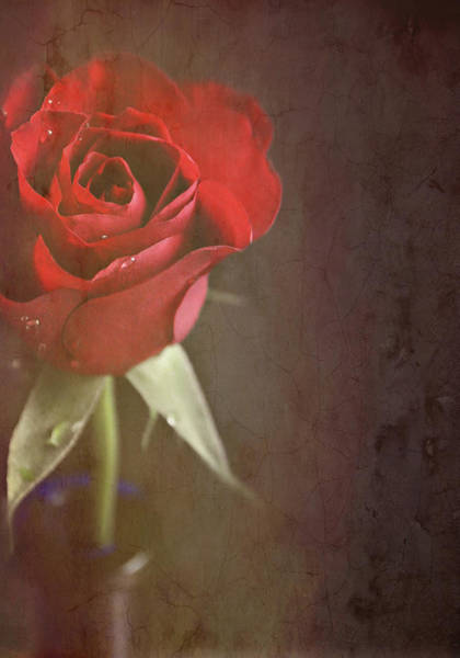 Randle Photograph - Red Rose by Photo - Lyn Randle