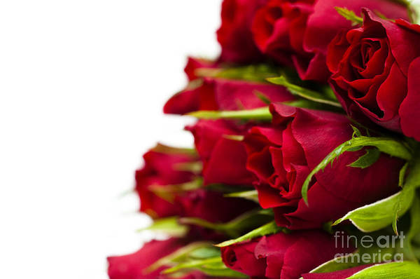 Rosaceae Wall Art - Photograph - Red Roses by Anne Gilbert