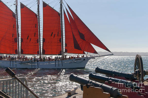 Photograph - Red Sails In San Diego by Brenda Kean
