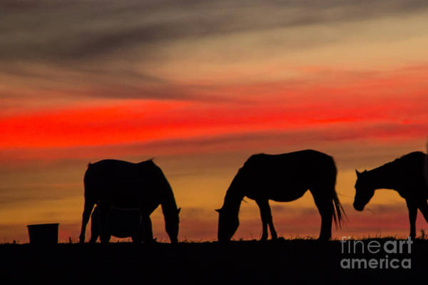 Photograph - Red Sky by Jim McCain