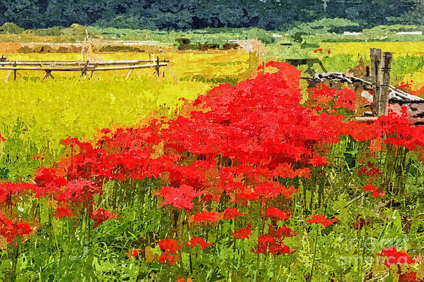 Photograph - Red Spider Lilies Vivid Rice Field Rural Painterly by Beverly Claire Kaiya