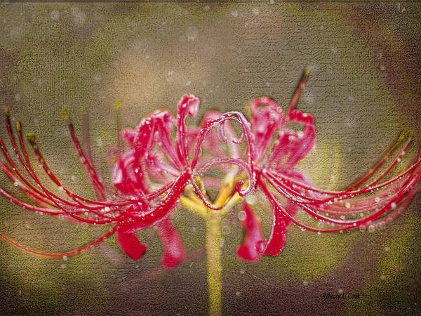 Photograph - Red Spider Lily In Rain by Bellesouth Studio