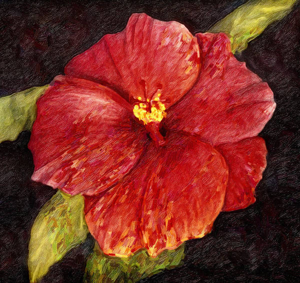 Hibiscus Flower Painting - Red Splash by Isabella Howard