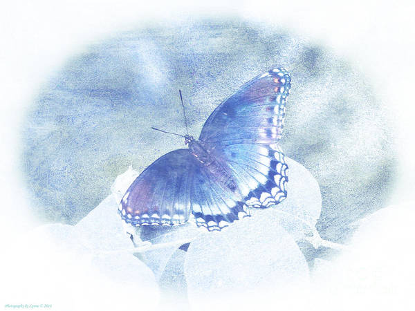 Photograph - Red Spotted Purple Butterfly - Pastel by Gena Weiser