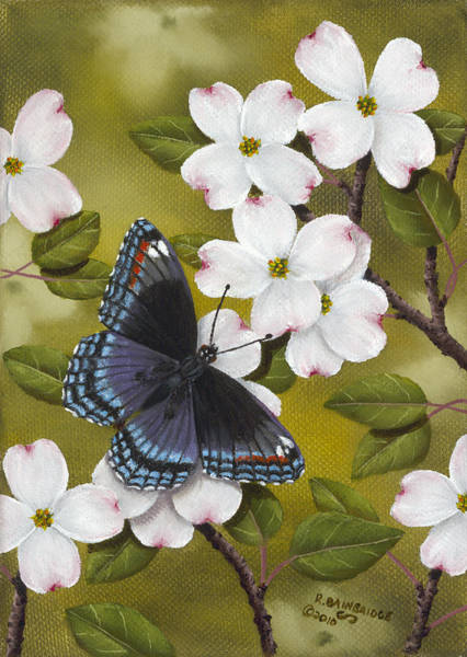 Dogwood Painting - Red Spotted Purple by Rick Bainbridge