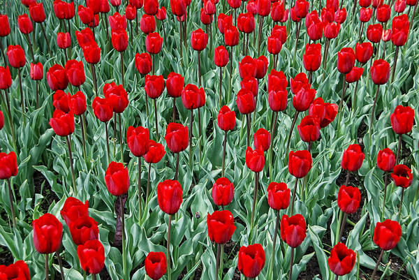 Wall Art - Photograph - Red Spring by Joachim G Pinkawa