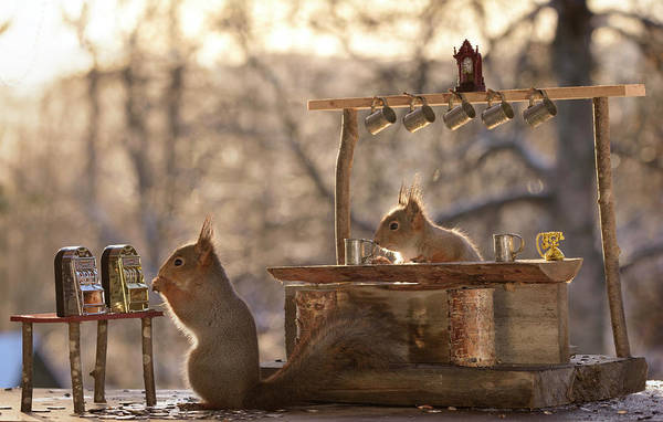 Wall Art - Photograph - Red Squirrels With Bar And Slot Machine by Geert Weggen