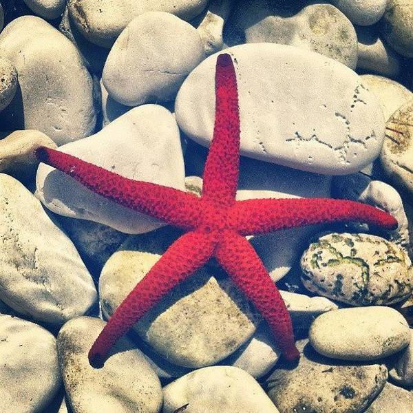 Colorful Wall Art - Photograph - Red Star! by Emanuela Carratoni