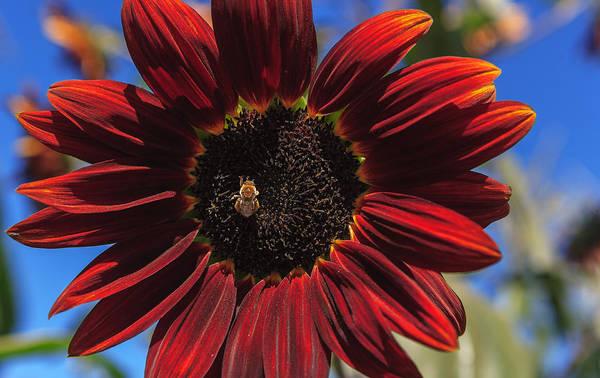 Photograph - Red Sun Honey by Scott Campbell