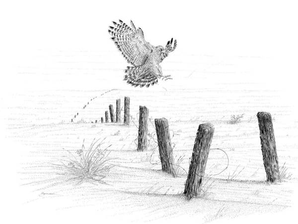 Drawing - Red-tailed Hawk by Carl Genovese