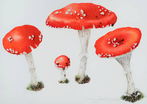 Toadstools Wall Art - Painting - Red Toadstools Fly Agaric  by Sally Crosthwaite