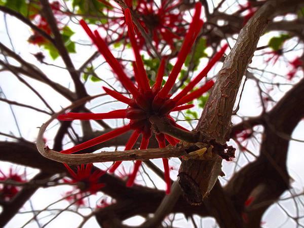 Red Tree Spiders  Art Print