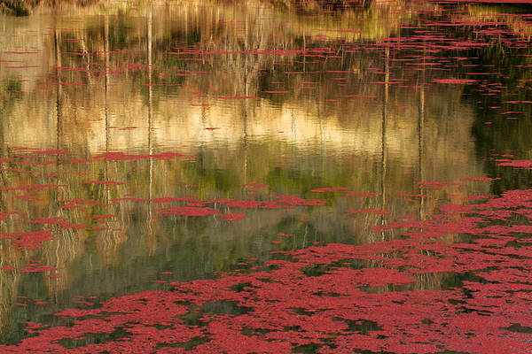 Painterly Photograph - Red by Tsuneya Fujii