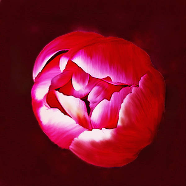 Photograph - Red Tulip by Bob and Nadine Johnston