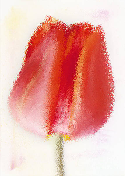 Photograph - Red Tulip by Pam  Holdsworth