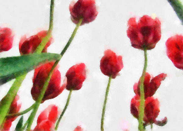 Photograph - Red Tulips From The Bottom Up Lll by Michelle Calkins