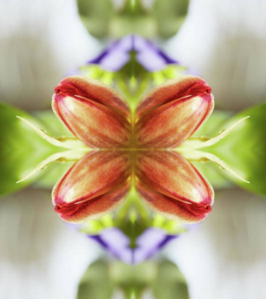 Photograph - Red Tulips by Silvia Otte
