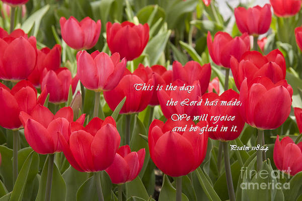 Photograph - Red Tulips With Scripture by Jill Lang