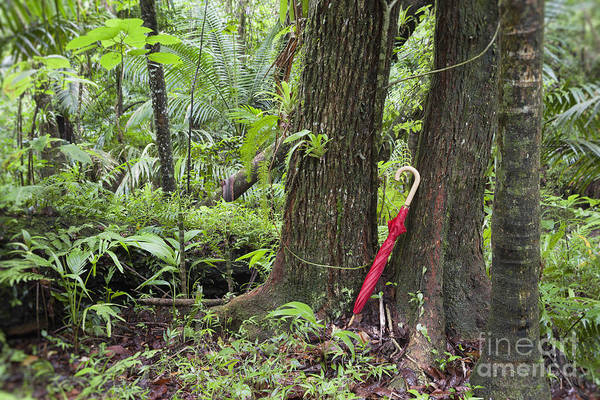 Photograph - Red Umbrella Leaning Against Tree In Rainforest by Bryan Mullennix