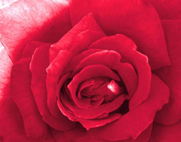 Photograph - Red Velvet Rose by Denise Beverly