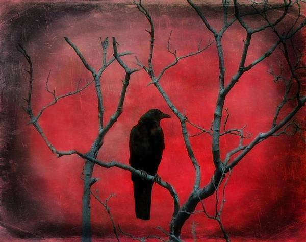 Blackbird Photograph - Red Velvet by Gothicrow Images