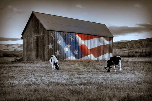 Photograph - Red White And Moo Black And White by Ryan Smith