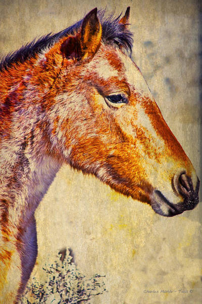 Photograph - Red Willow Pony  Xxx  by Charles Muhle